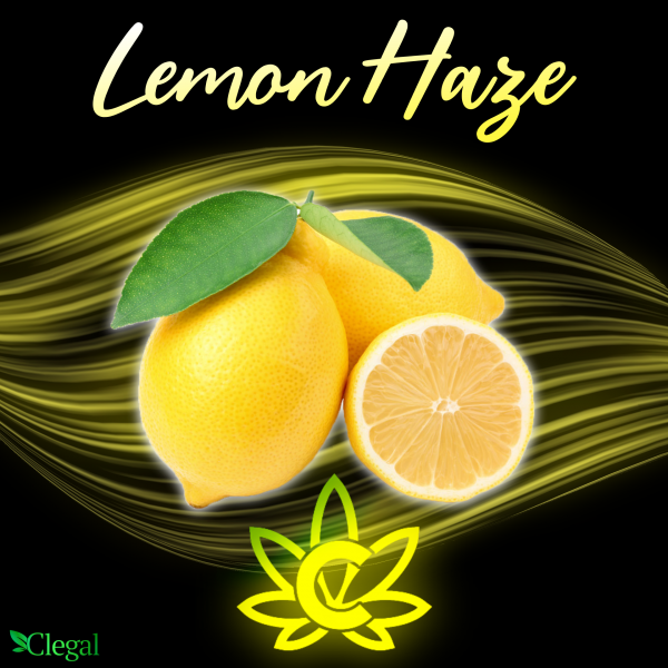 Lemon Haze