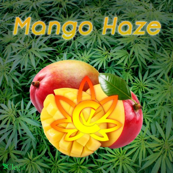Mango Haze