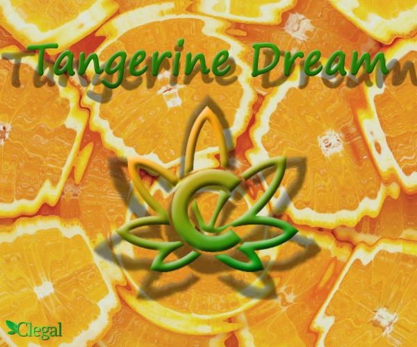 Tangerine Dream fleurs CBD
